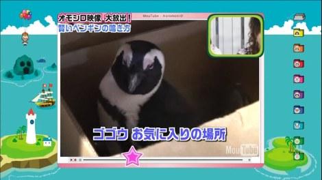 Pingu box